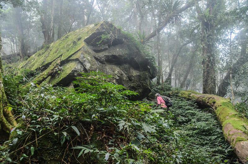 1598 峰下巨石倒木 (2)