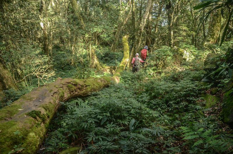 1598 峰下巨石倒木 (1)