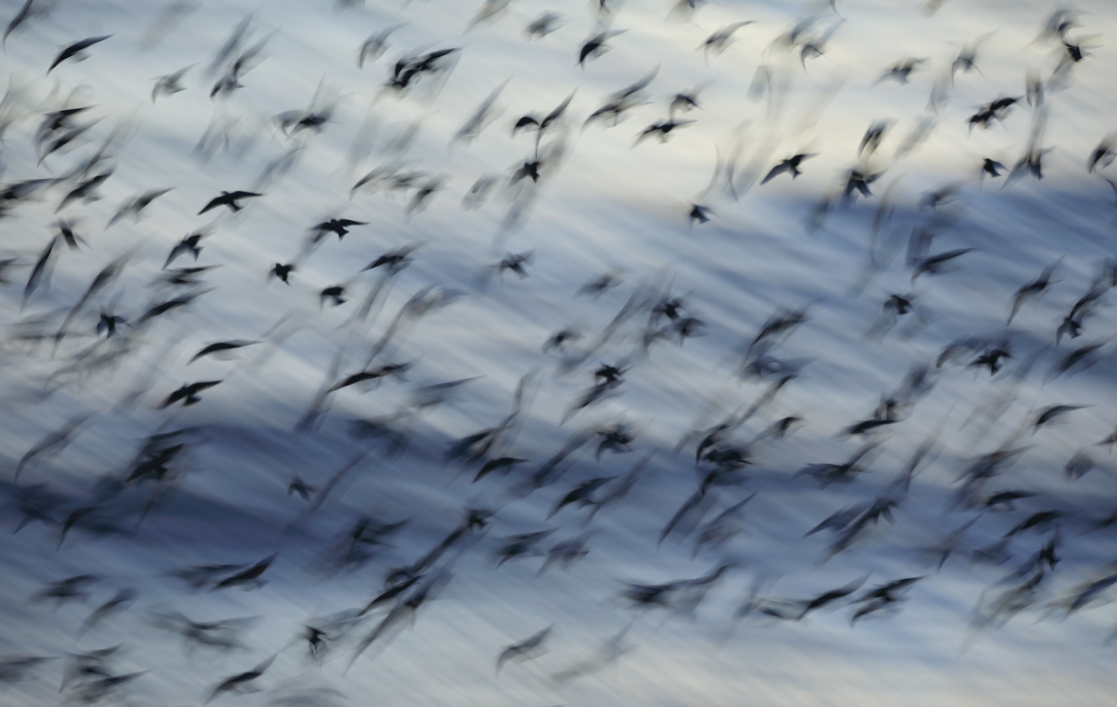 Starling Motion Blur and Waves