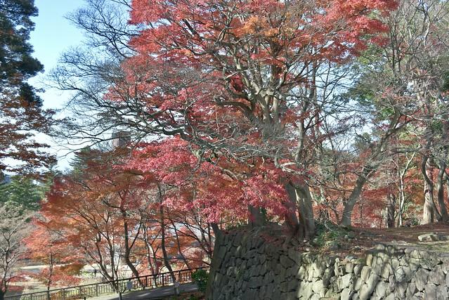 今年最後の紅葉 その3 金沢城址公園