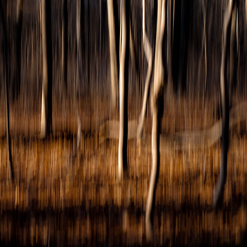 d5000 dof icm nikon ryersonwoodsforestpreserve abstract autumn blur depthoffield forest intentionalcameramovement landscape motion movement natural noahbw square treetrunk trees woods