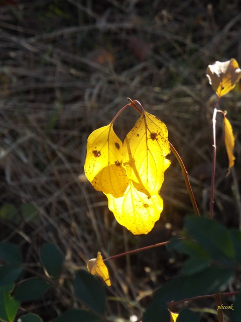 Yellow Leaf and Shadow