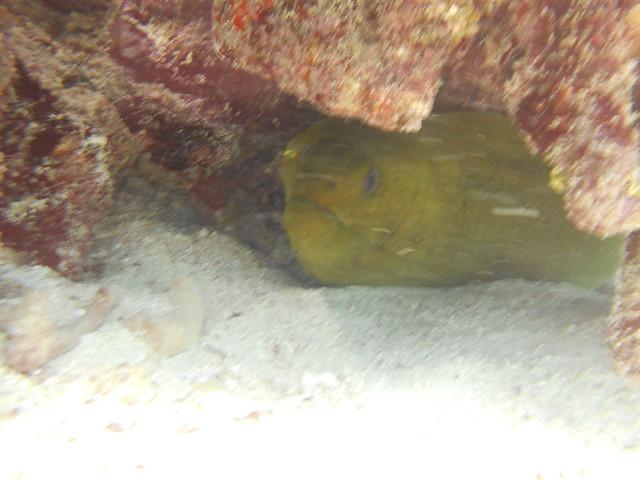 Florida Keys December 17 All Day Dive Report