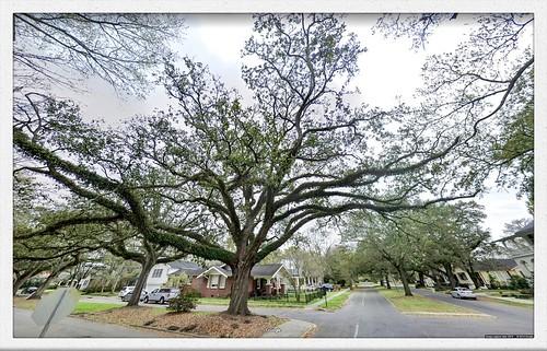 googlestreetview gsv batonrouge louisiana instalab oak oaktree majestic