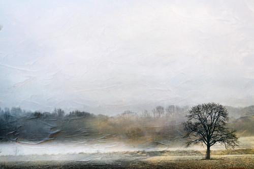 landscape farm fog nature tree ohio canon texture field outdoors rural