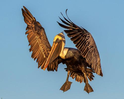 outdoor seaside dennis adair sky nature wildlife 7dm2 7d ii ef100400mm canon florida bird