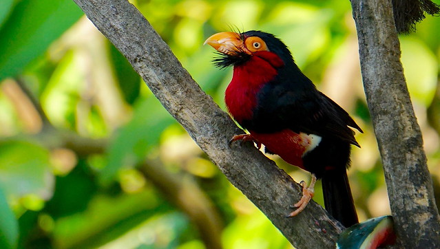 Vibrant African Tropical Bird