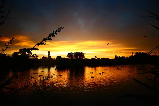 On Golden Ponds.