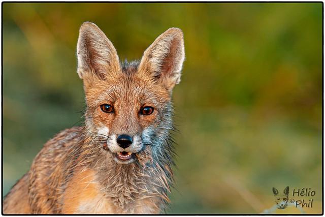 Bonnie Fox