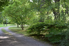 A Wychwood Park drive