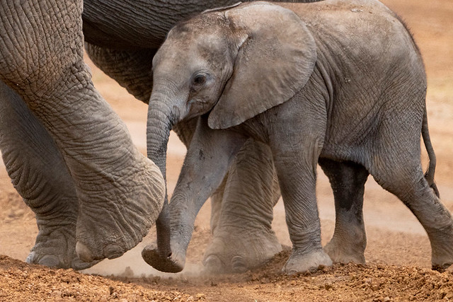 Kenya Photography Safari Sep 2021