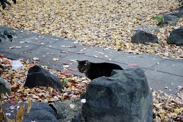 Today's Cat@2020−12−13