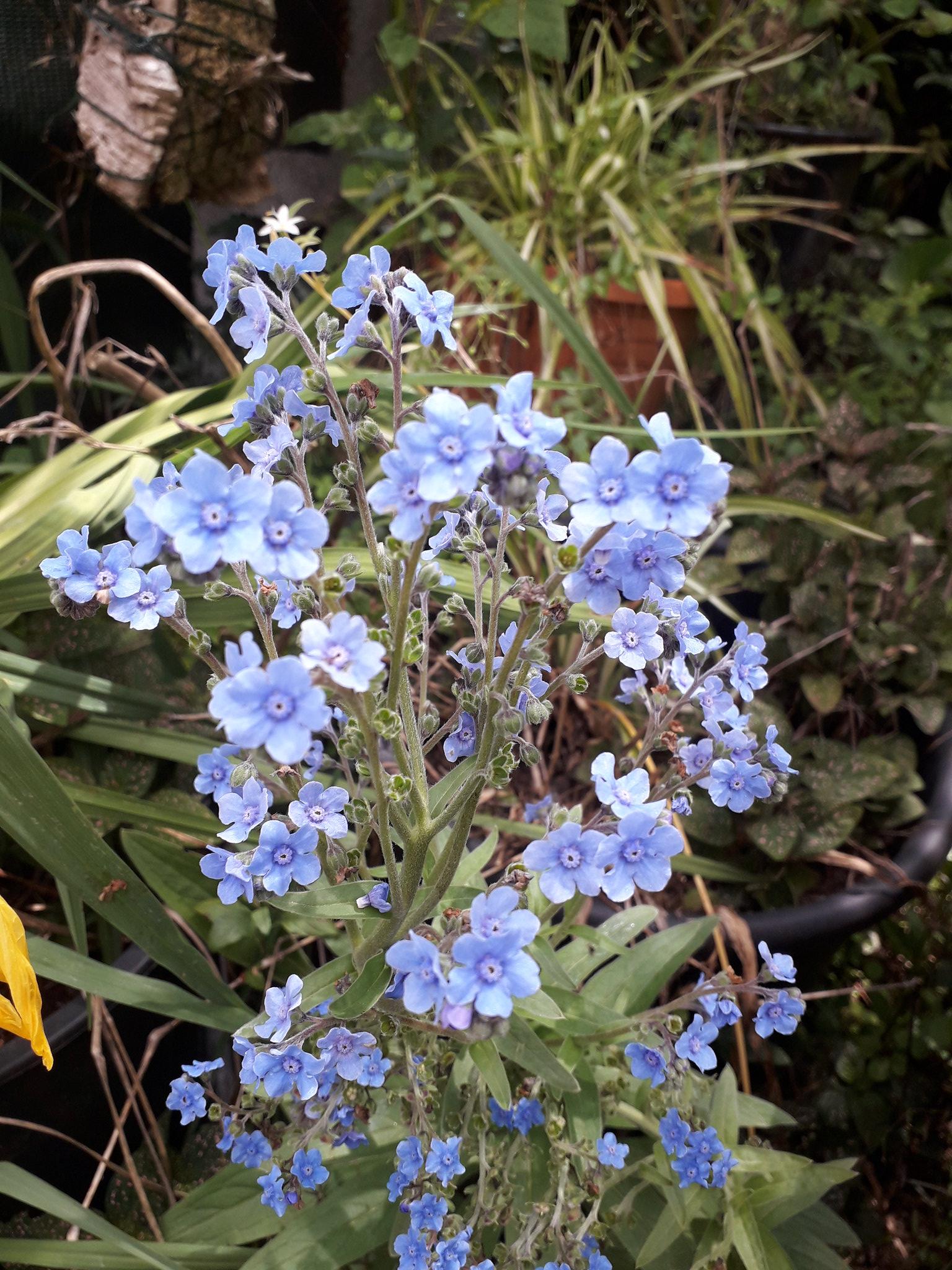 Quelques floraisons du jardin... 50714223568_05218a93bb_k