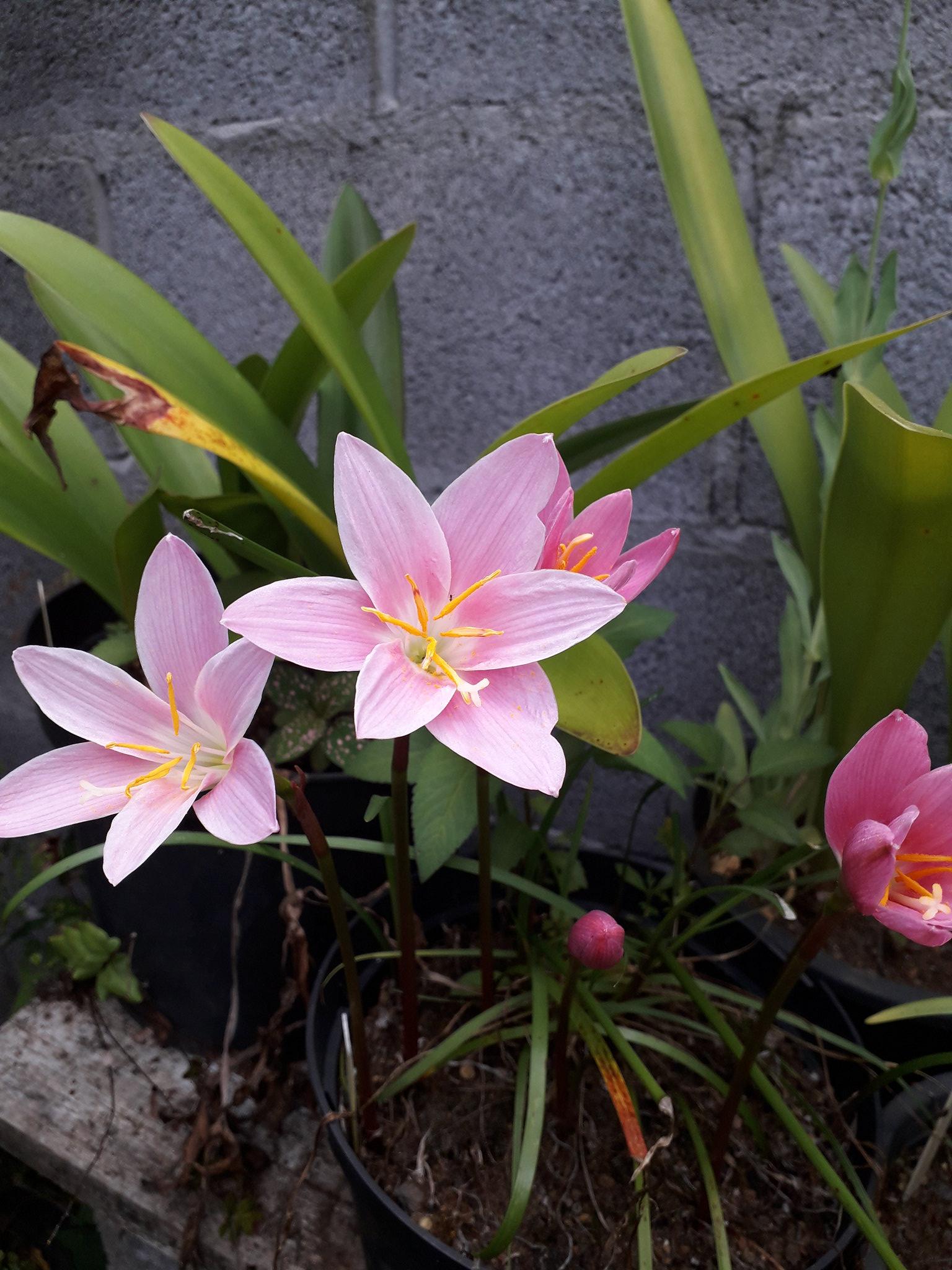 Quelques floraisons du jardin... 50714236413_1ed8a0de2e_k