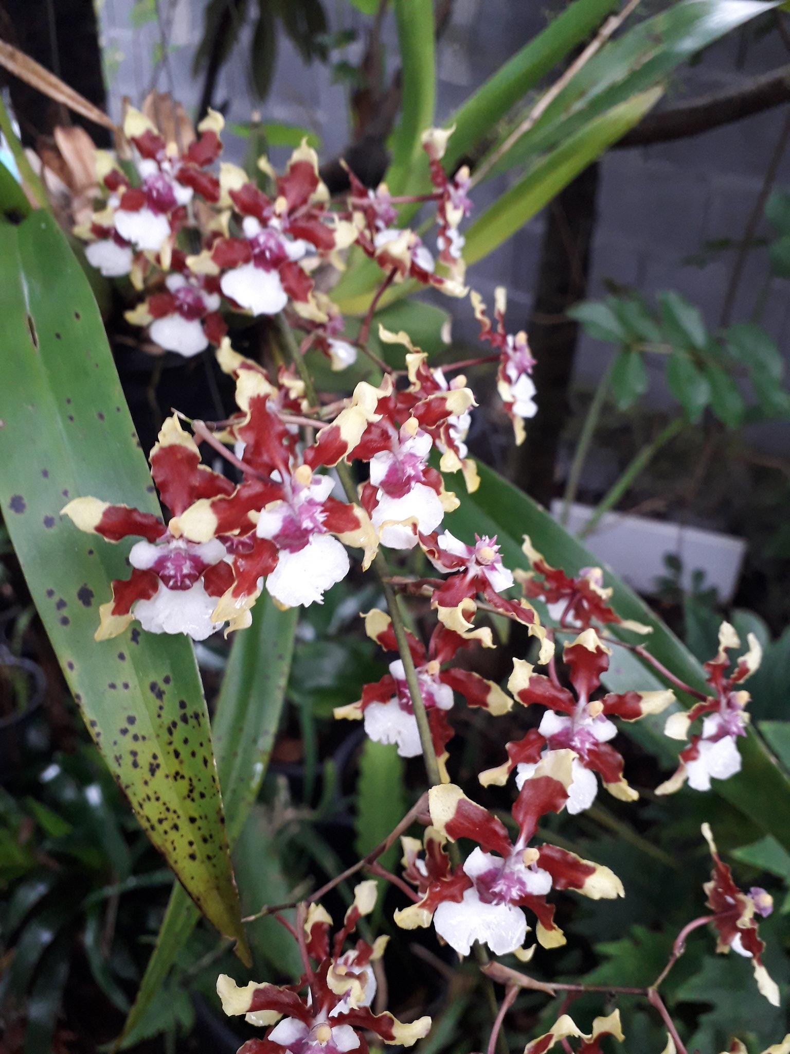 Quelques floraisons du jardin... 50714246633_27cd1bb12b_k