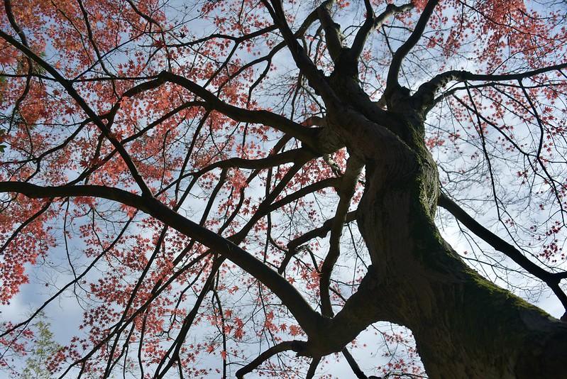 本多の森の紅葉