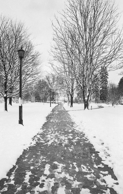 Gairloch Garden Path Winter Wonderland Two