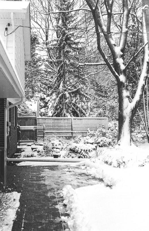Snowy Backyard One