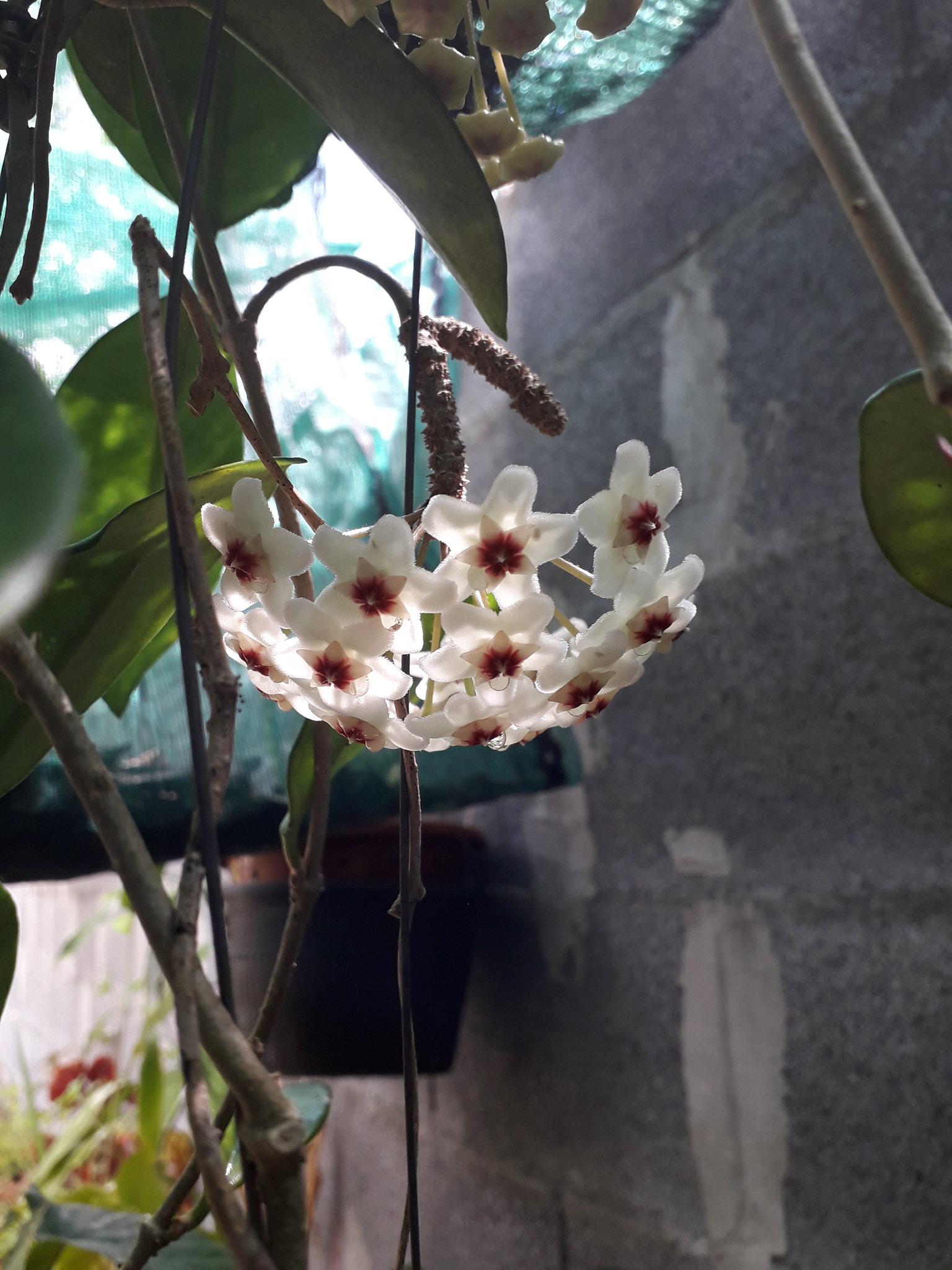 Quelques floraisons du jardin... 50714954021_988474d720_k