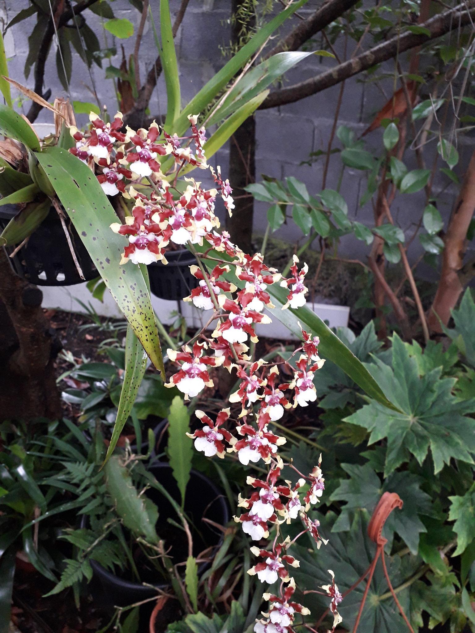 Quelques floraisons du jardin... 50714984016_17414e8d19_k