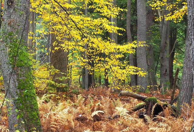 More PA Autumn