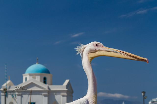 Armchair Traveling - Petros the Pelican on Mykonos