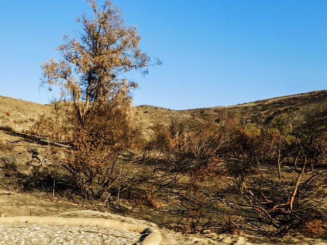 Burned Eucalyptus (Explored)