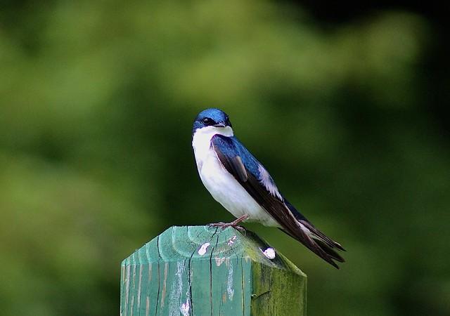 Bird on a fence post