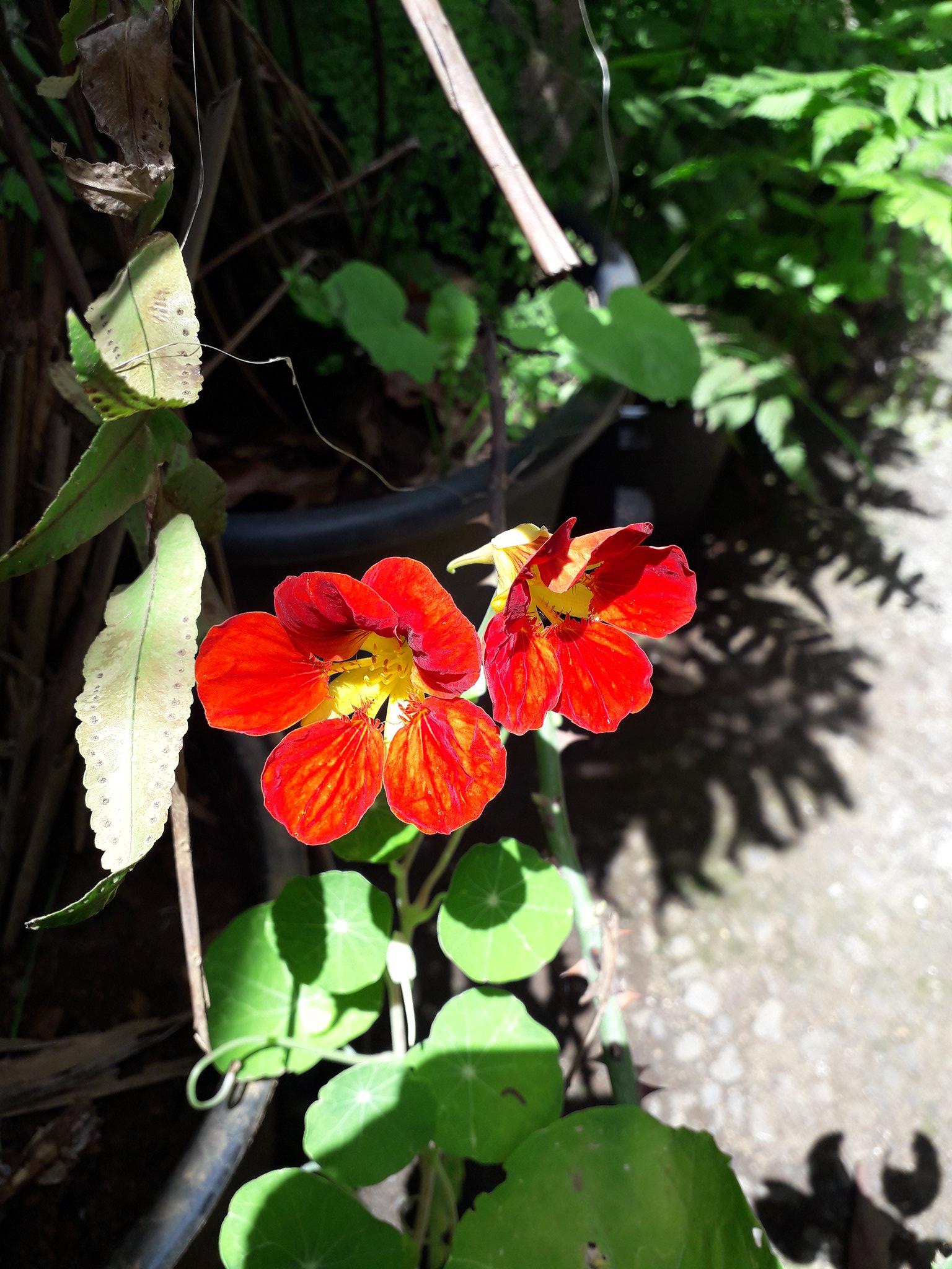 Quelques floraisons du jardin... 50717755718_9a60c07a7f_k