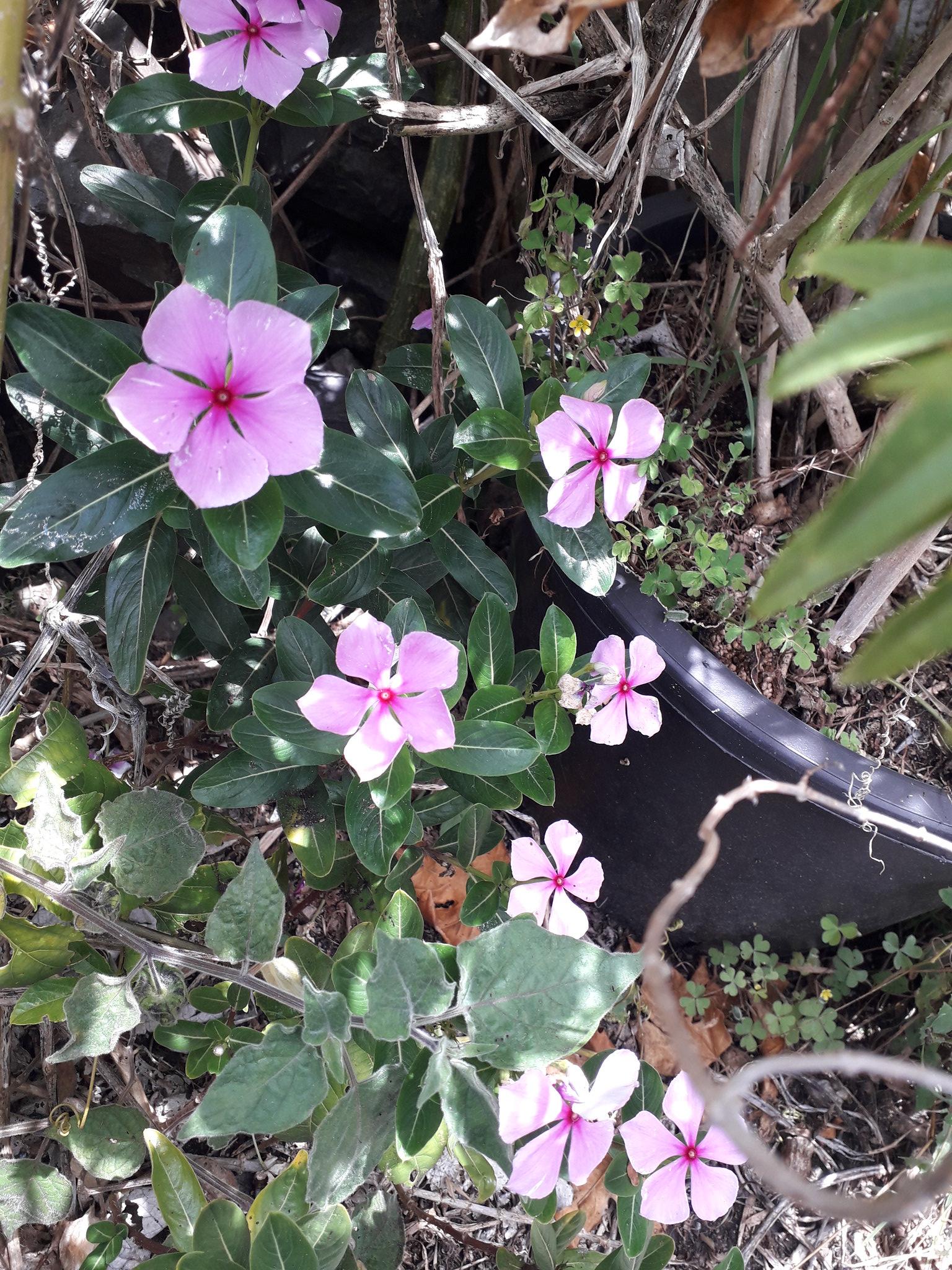 Quelques floraisons du jardin... 50717774618_4874f76824_k