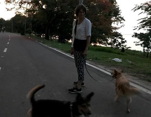 Karen walking dogs
