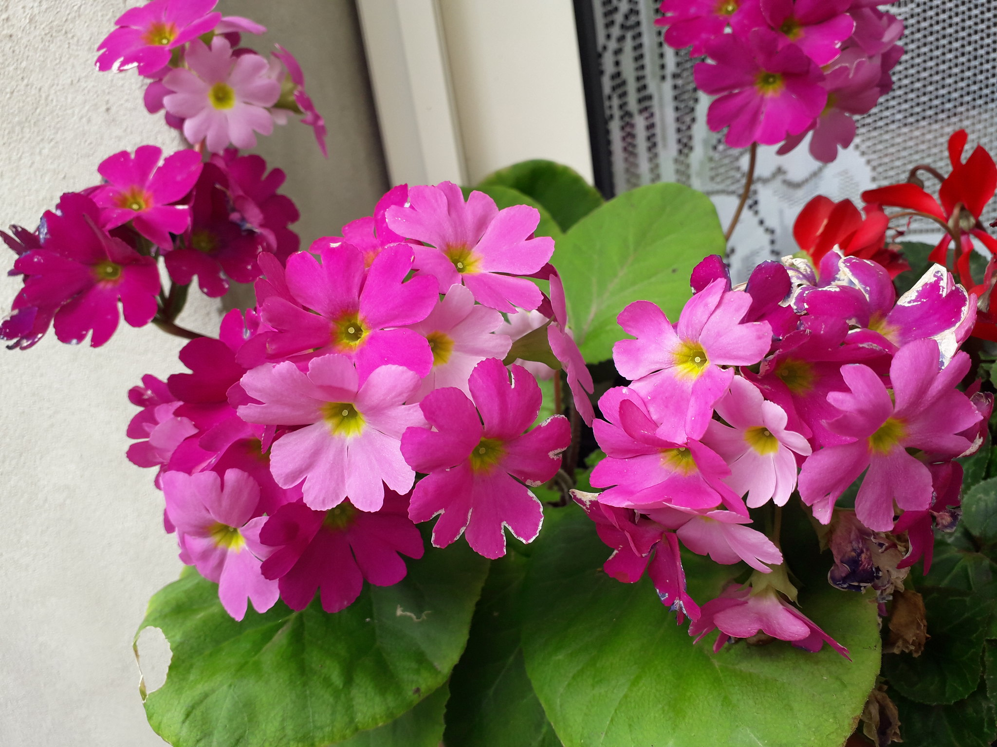 Quelques floraisons du jardin... 50718484281_55193126e7_k