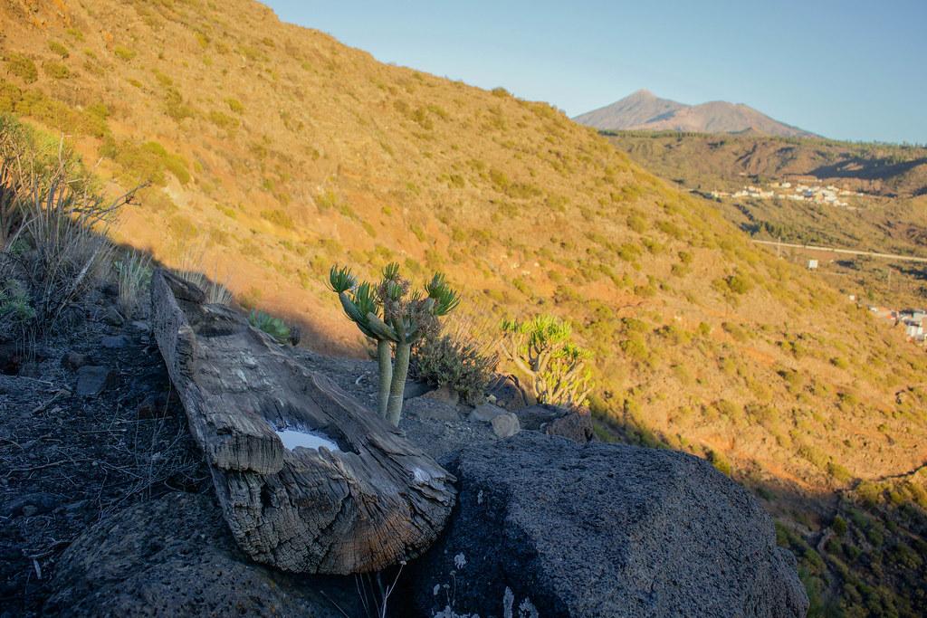 Dornajo situado próximo a la Fuente de Tenerguera en Teno