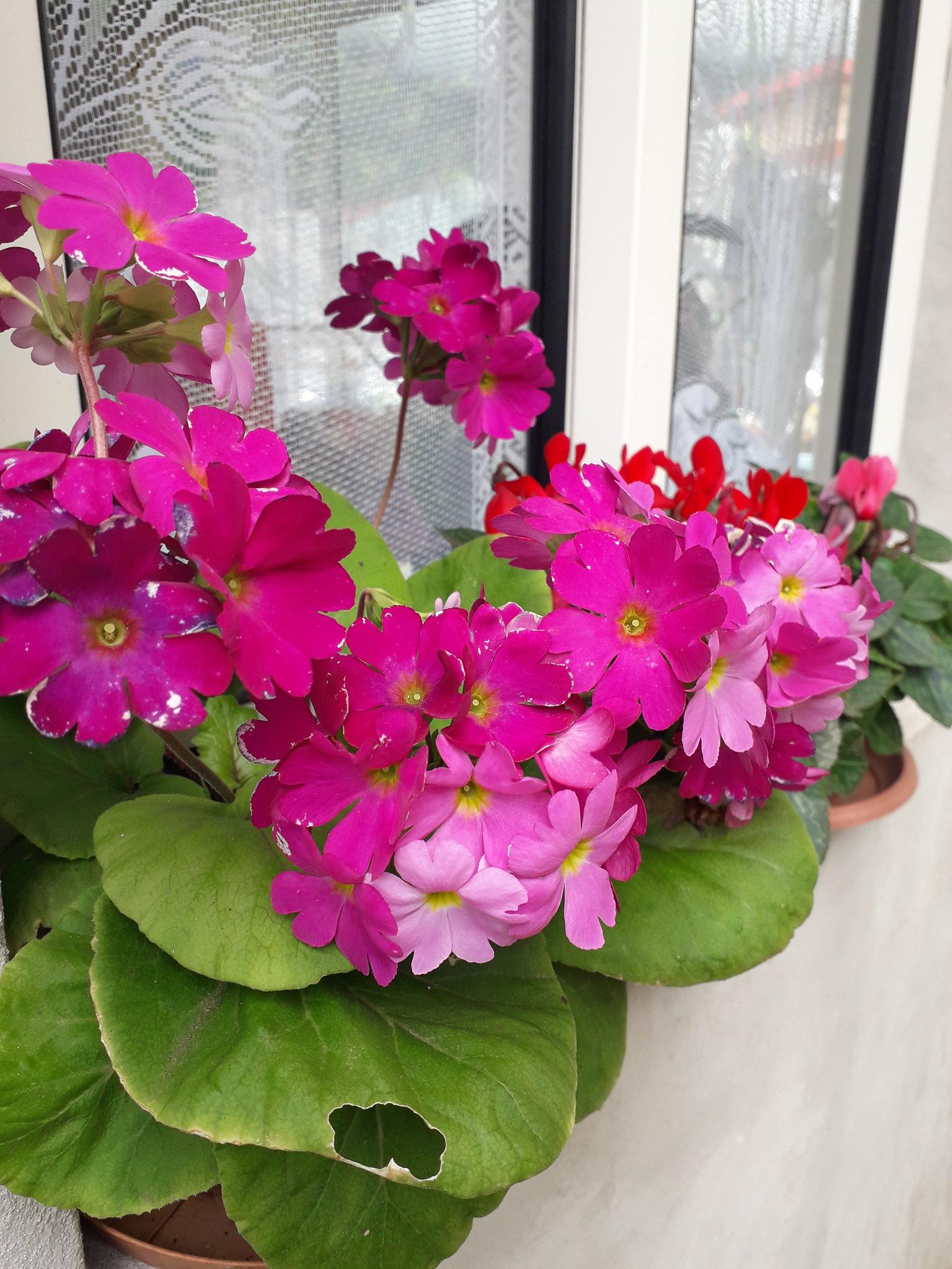 Quelques floraisons du jardin... 50718568022_51d6878821_k