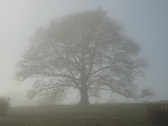 Holding back the fog