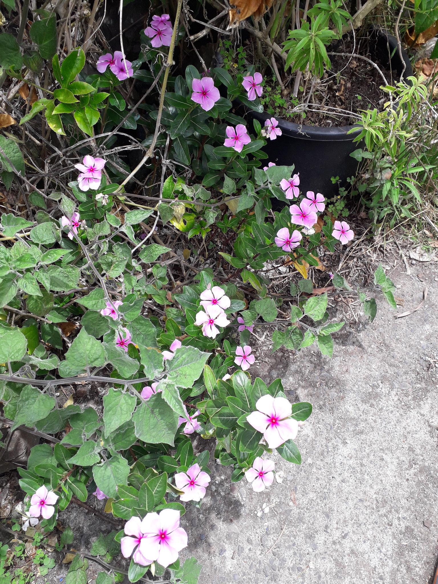 Quelques floraisons du jardin... 50718589207_f1fb2f5ab7_k