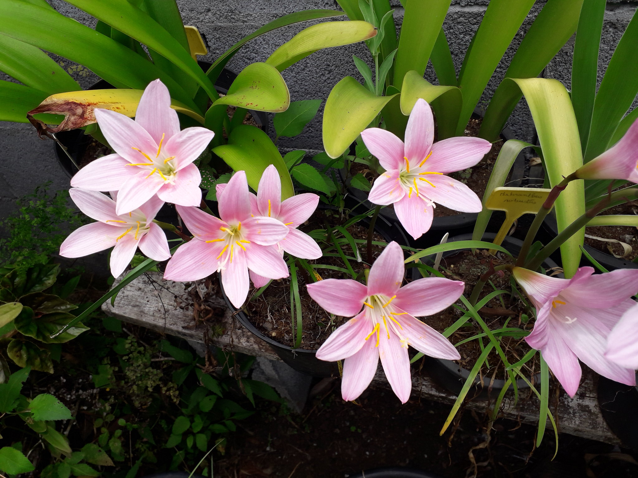 Quelques floraisons du jardin... 50718599002_8662cf3993_k