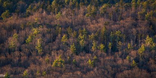 mount watatic trees sunrise winter new england nature hiking landscape