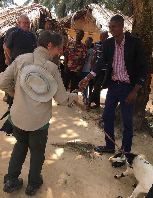 gift goat in Benekamba