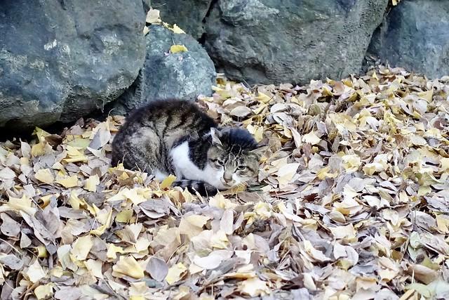 Today's Cat@2020−12−14