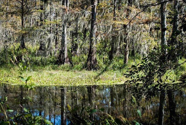 Swampy Colors