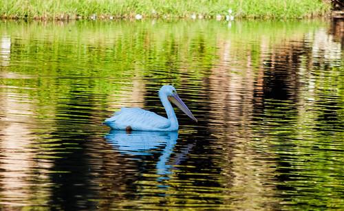LSU Lake Colors
