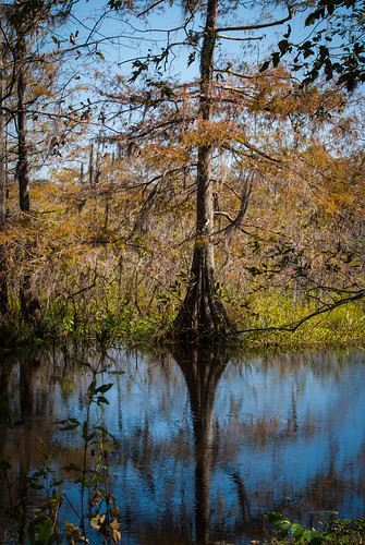 Cypress Reflected