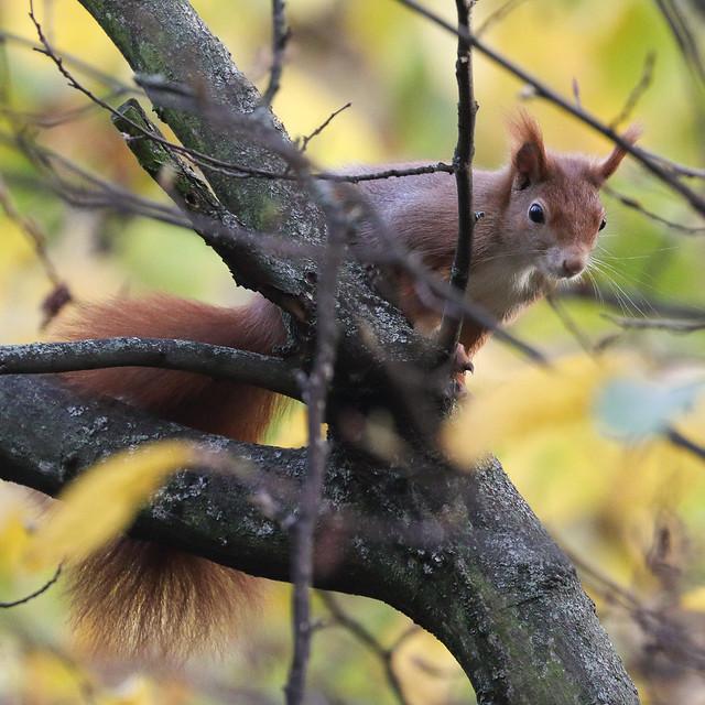 An Autumn Visitor