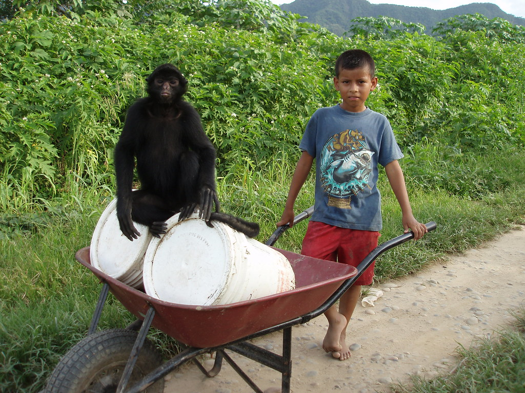 A boy takes the pet spider-monkey for a wheel-barrow ride to get mum some water