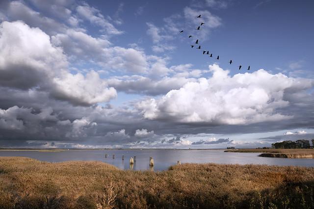The Flight of the Cranes