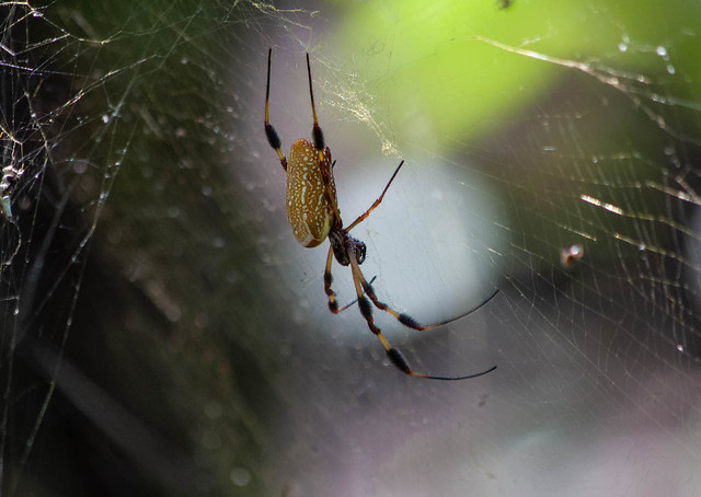 Hanging in my Web