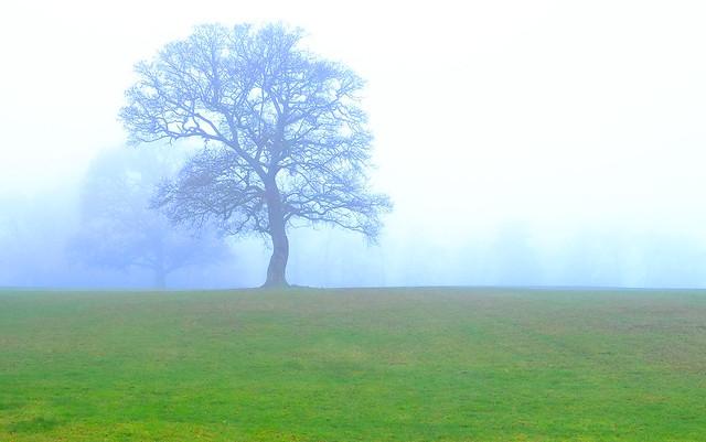 Foggy Saturday..AONB