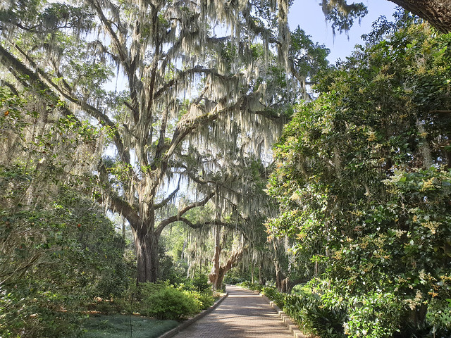 50721622181 9d3822988e z Maclay Gardens State Park   Tallahassee, Florida.
