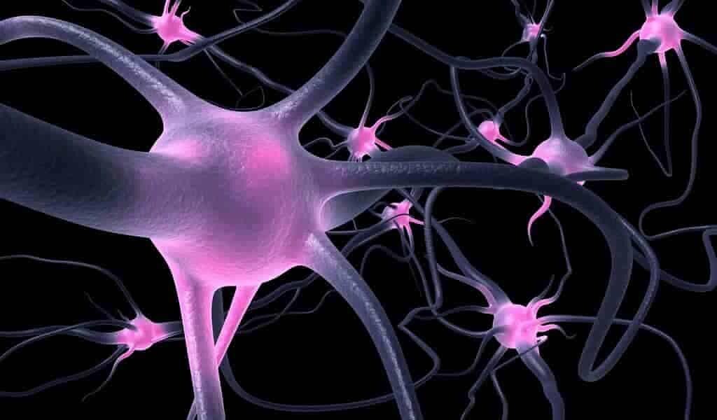 Un système nerveux artificiel agit comme un humain